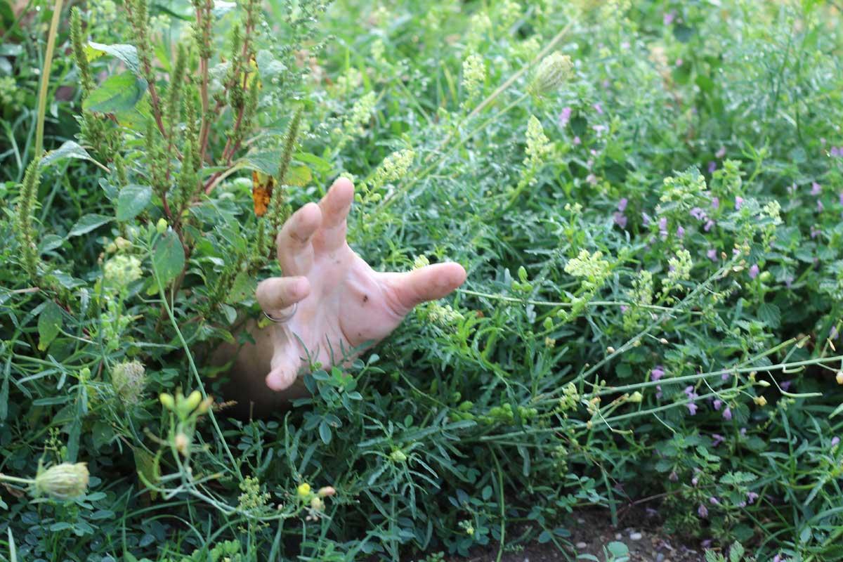 Florizid Oder Das Unkraut Der Garten Und Ich Shrimpskrams